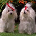 La esterelización de las perras