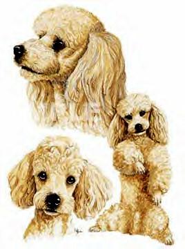 Los perros de la raza Caniche