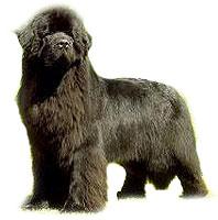 Terranova, perros de rescate