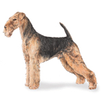 Perros Airedale