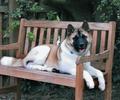 http://www.guiadog.com/images/stories/perros_grandes/akita4.jpg