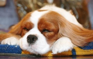 Los sueños de los perros