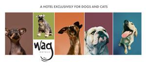 Wag Hotels Hotel de lujo para perros